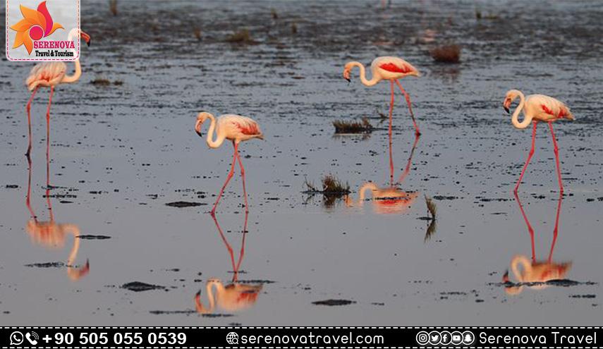 جنة الطيور في ازمير